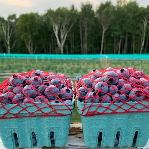 Berry Pints