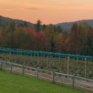 Sunset at the Berry Farm