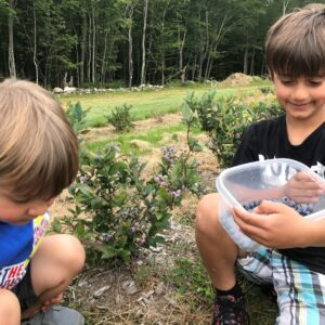 Berry Picking with the Family