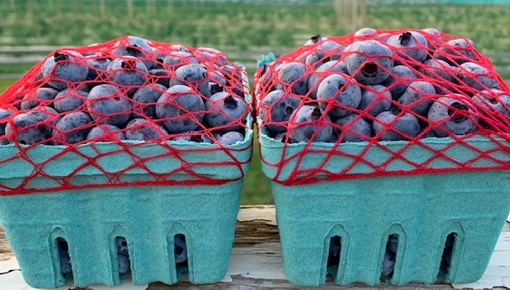 Sugar Hill Blueberry Pints